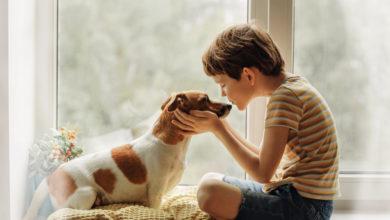 Photo of Hund und Kind: Tipps für ein unbeschwertes Zusammenleben
