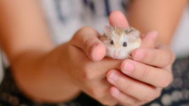 Photo of Hamster als Haustier für Kinder: Eine gute Idee?