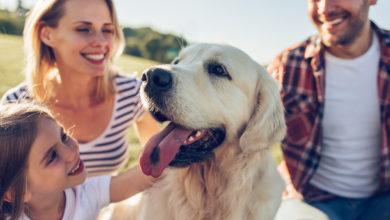 Photo of Familienfreundliche Hunderassen: Welche eignen sich besonders?