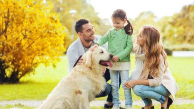 Photo of Hunderassen für Familien: Unsere Top 3 der Familienhunde